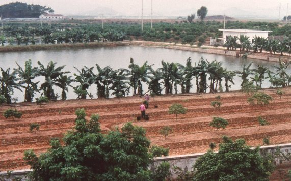 fish ponds and banannas, PRC