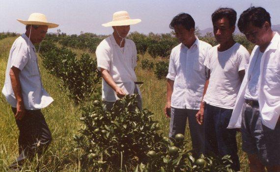 Jiebei orchard, Lufeng, 1990