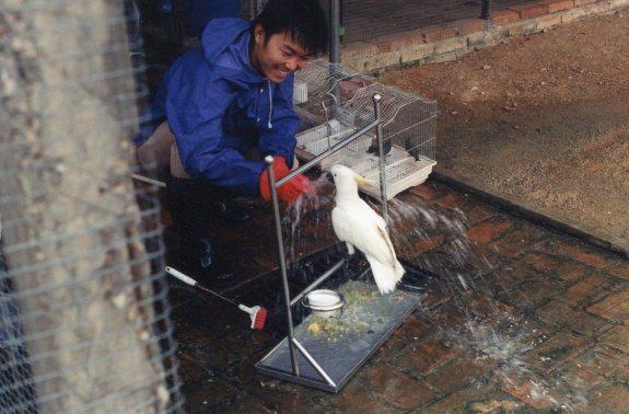 washing cockatoo, ZARC, '01
